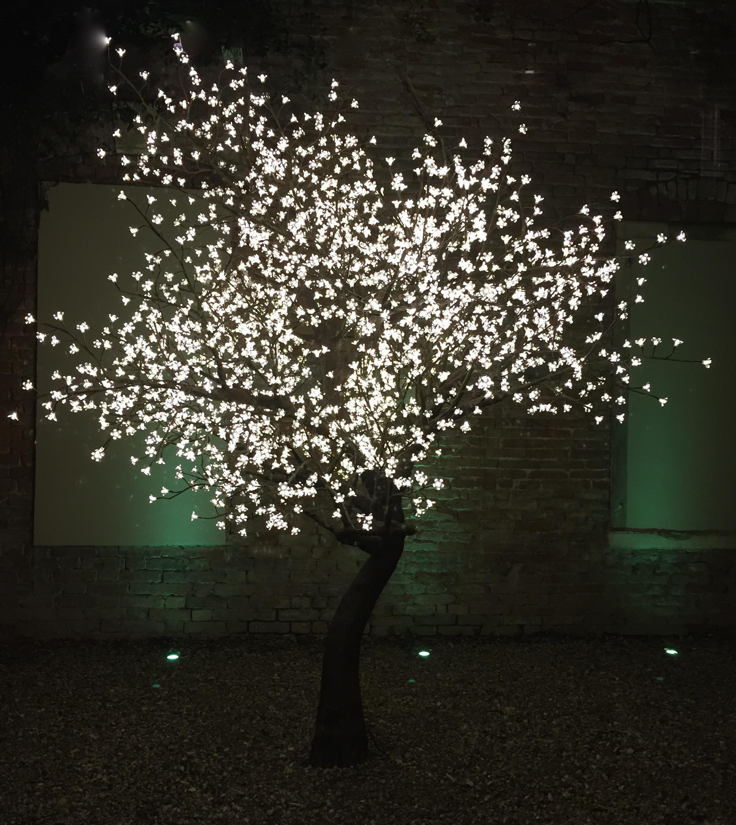 L'albero luminoso
